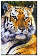 Animals (350)