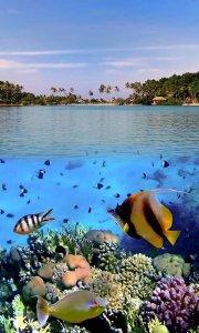 Ocean Fish Live Wallpaper