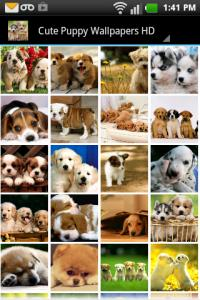 Cute Puppy Wallpapers HD