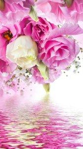 Pink Roses Live Wallpaper