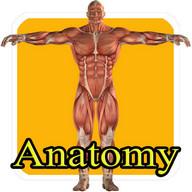 Learn human anatomy for kids