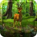 Dawn Forest 3D