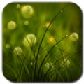 Free Colorful Summer Meadow