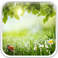 Green Spring Live Wallpaper