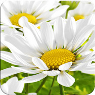 My Flower 3D Live wallpaper