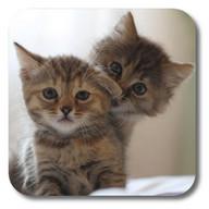 Q Cats Live Wallpaper