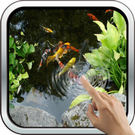 Magic Touch: Realistic Koi Live Wallpaper