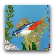 aniPet Freshwater Aquarium (free) Live Wallpaper