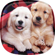 Puppies Live Wallpaper ? Cute Puppy Pictures