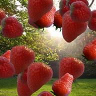 Floating Strawberries Free
