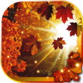 Autumn Sun HD live wallpaper