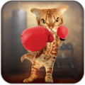 Boxing Cat