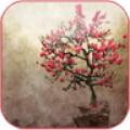 Galaxy s4 leaf lonely flower tree