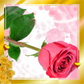 Love Roses HD live wallpaper