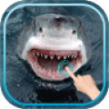 Magic Touch Shark Attack