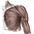 Muscle Atlas
