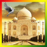 Taj Mahal Birds Live Wallpaper