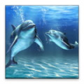 3D dolphin HD live wallpaper - Dolphin lovers, take your dolphins with you!