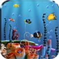 Live Fish Feed Wallpaper