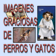 Imagenes perros y gatos humor