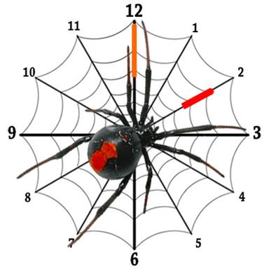 Spider Clock Widget