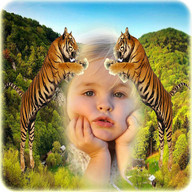 Wildlife Animal Photo Frames