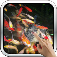 Baby-Koi: Water Effect