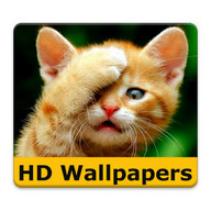 Cat wallpapers and funny pics