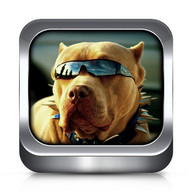 Dog Ringtones and Wallpapers