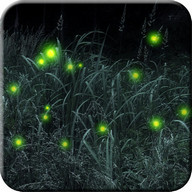 Firefly Live Wallpaper Free