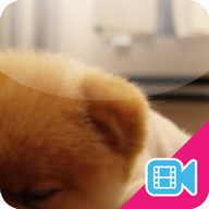 ► Lazy Puppy Live WallPaper