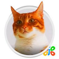 Live HD Cat Wallpaper