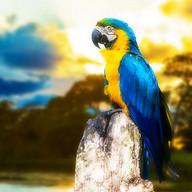 Macaw THEME XPERIA