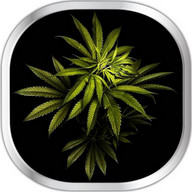 Weed Live Wallpaper