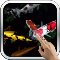Magic touch: Koi Fish