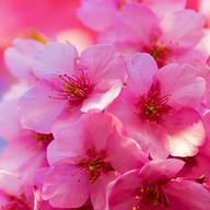 Spring Day Atom theme