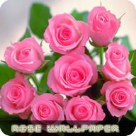 Fonds d'écran de fleurs roses