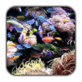 Tropical Aquarium Live Wallpaper