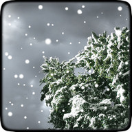 Winter Snowfall Free Wallpaper