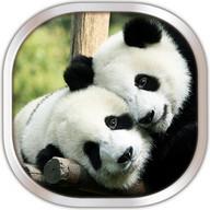 Panda Fond D'écran Animé
