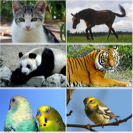 30 Animal sounds and ringtones