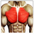 Best Chest Workout
