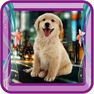 Cute Dog Photo Frame