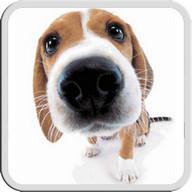 DOG LICKS SCREEN LWP FREE