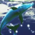 Dolphin Moonlight Trial
