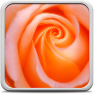 Macro Rose Live Wallpaper