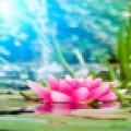 Magic Water Lotus LWP