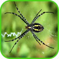 خلفيات العنكبوت