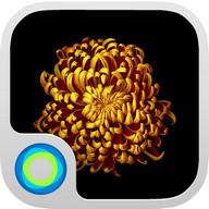 Gold Flower Launcher Theme