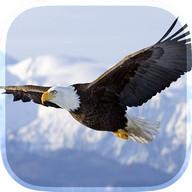 Eagle Live Wallpaper